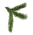 green fluffy pine branch with short needles vector image
