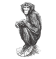 Hand drawn monkey sitting on the tree vector image vector image