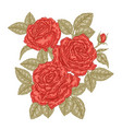 hand drawn red roses flowers and leaves vintage vector image vector image