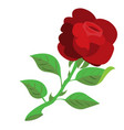 rose the flower color logo vector image vector image