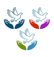 Pigeon of peace flying from open hands icon vector image
