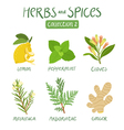 Herbs and spices collection 2 vector image vector image