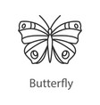 butterfly linear icon vector image