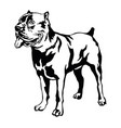 decorative standing portrait of dog cane corso vector image vector image