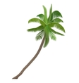 Exotic tropical Coco nut high detailed palm vector image vector image
