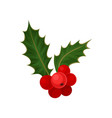 holly with red berries and green leaves natural vector image vector image