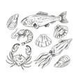 seafood mollusk salmon fish shrimp shell crab vector image