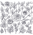 set roses and leaves hand drawn vector image