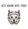 dog west highland white terrier face icon vector image vector image
