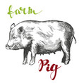 farm pig hand drawn realistic vector image vector image