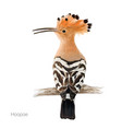 hoopoe bird vector image