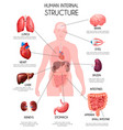 realistic human internal organs infographics vector image