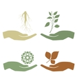 Hand holding plant Growth concept vector image