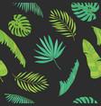 tropical palm monstera chamaedorea leaves vector image