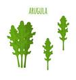 arugula leafvegetarian green vegetableflat style vector image vector image