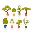 bonsai tree set decorative plants in flower pots vector image