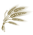 spikelets wheat tied with a ribbon vector image vector image