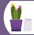 cactus plant in pot banner vector image