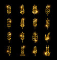 golden wheat ears icons isolated on black vector image