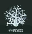 oakmoss or tree moss evernia prunastri botanical vector image