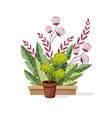 plants in pot indoor and outdoor landscape garden vector image vector image