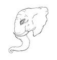 head of elephant vector image