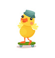 cute little yellow duck chick character in grey vector image vector image