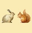 watercolor rabbit and squirrel set vector image vector image