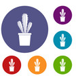 cactus in flower pot icons set vector image vector image