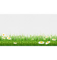 chamomile field green grass flowers and herbs vector image vector image