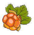 hand drawn cloudberry vector image