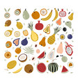 hand drawn tropical and exotic fruits isolated on vector image
