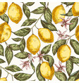 lemons hand drawn seamless pattern vector image vector image