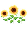 sunflower cartoon icons set vector image vector image