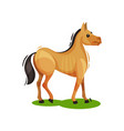 flat design of brown horse standing on vector image vector image