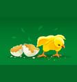newborn cartoon hen chicken vector image vector image