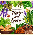 seasoning spices herbs and condiments vector image vector image