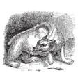 bear vintage vector image vector image