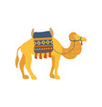 camel whit saddle and cover on the back two vector image