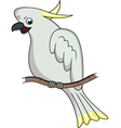 cockatoo cartoon vector image vector image