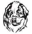 decorative portrait of dog st bernard vector image vector image