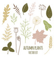 set of botany sketches and line doodles vector image vector image