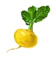 Turnip hand drawn painted vector image