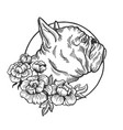 bulldog animal engraving vector image