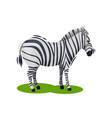 cute zebra standing on green grass african wild vector image