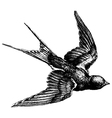Swallow engraving vector image vector image