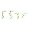 ivy corners climbing vine with green leaves set vector image