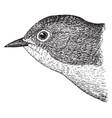 nashville warbler vintage vector image vector image