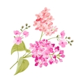 Purple Lilac flowers of Syringa vector image vector image