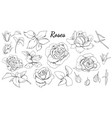 set roses and leaves isolated black and white vector image